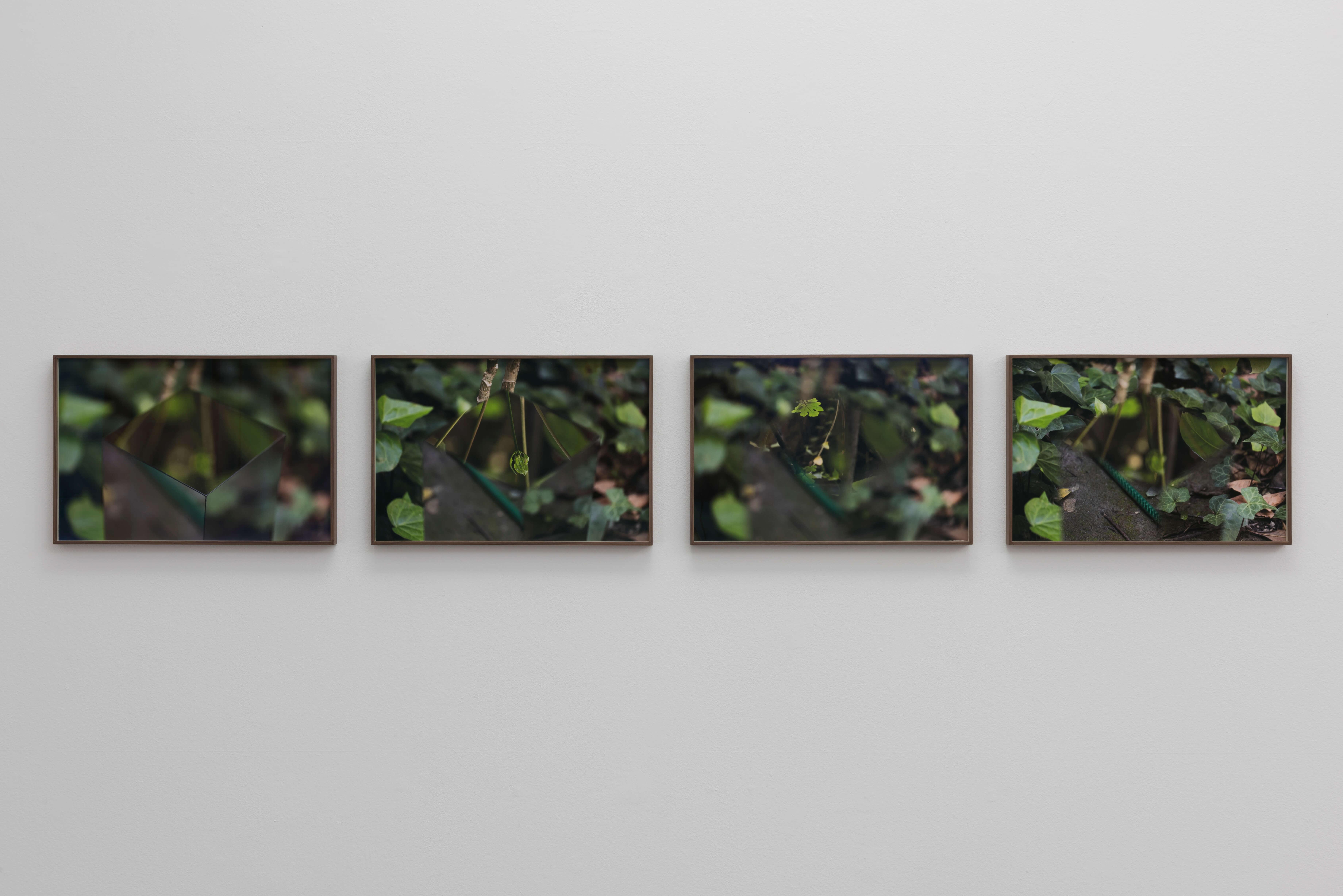 Secretos: Jardín 1, 2016 | El Triunfo de la Vida Solitaria | ProjecteSD