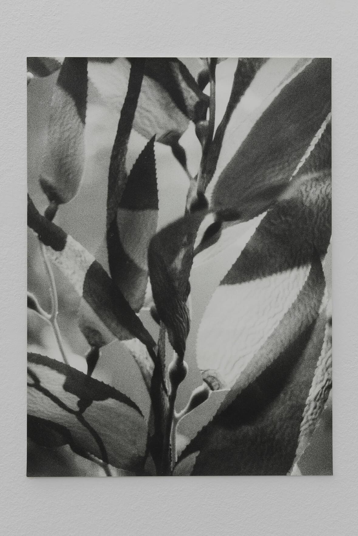 Untitled (Kelp), 2015 | Zostera & Posidonia | ProjecteSD