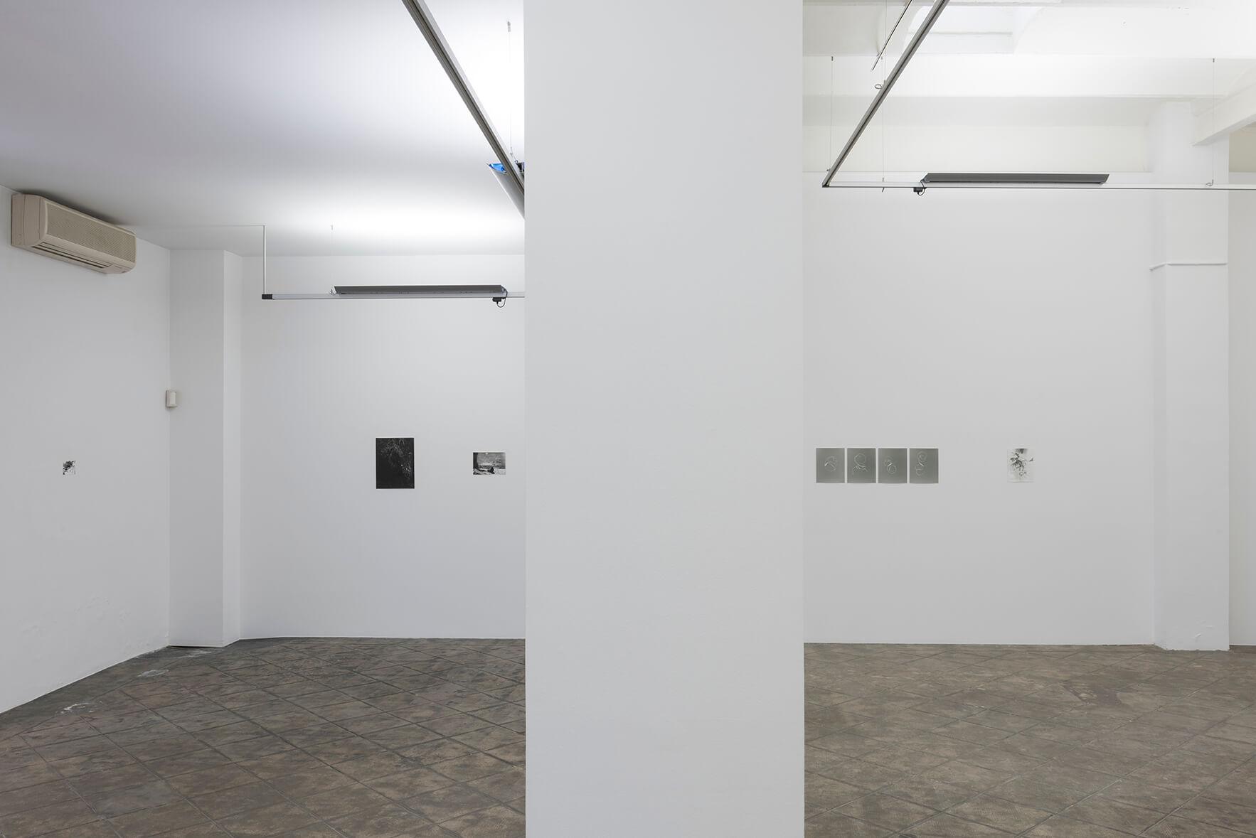 Installation view: Zostera & Posidonia, ProjecteSD | Zostera & Posidonia | ProjecteSD