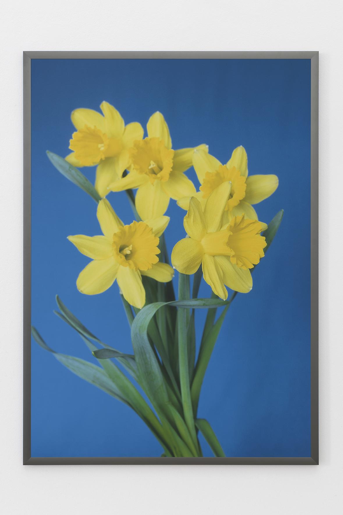 Blumenbild #58/120 (Iris), 2006 |  | ProjecteSD