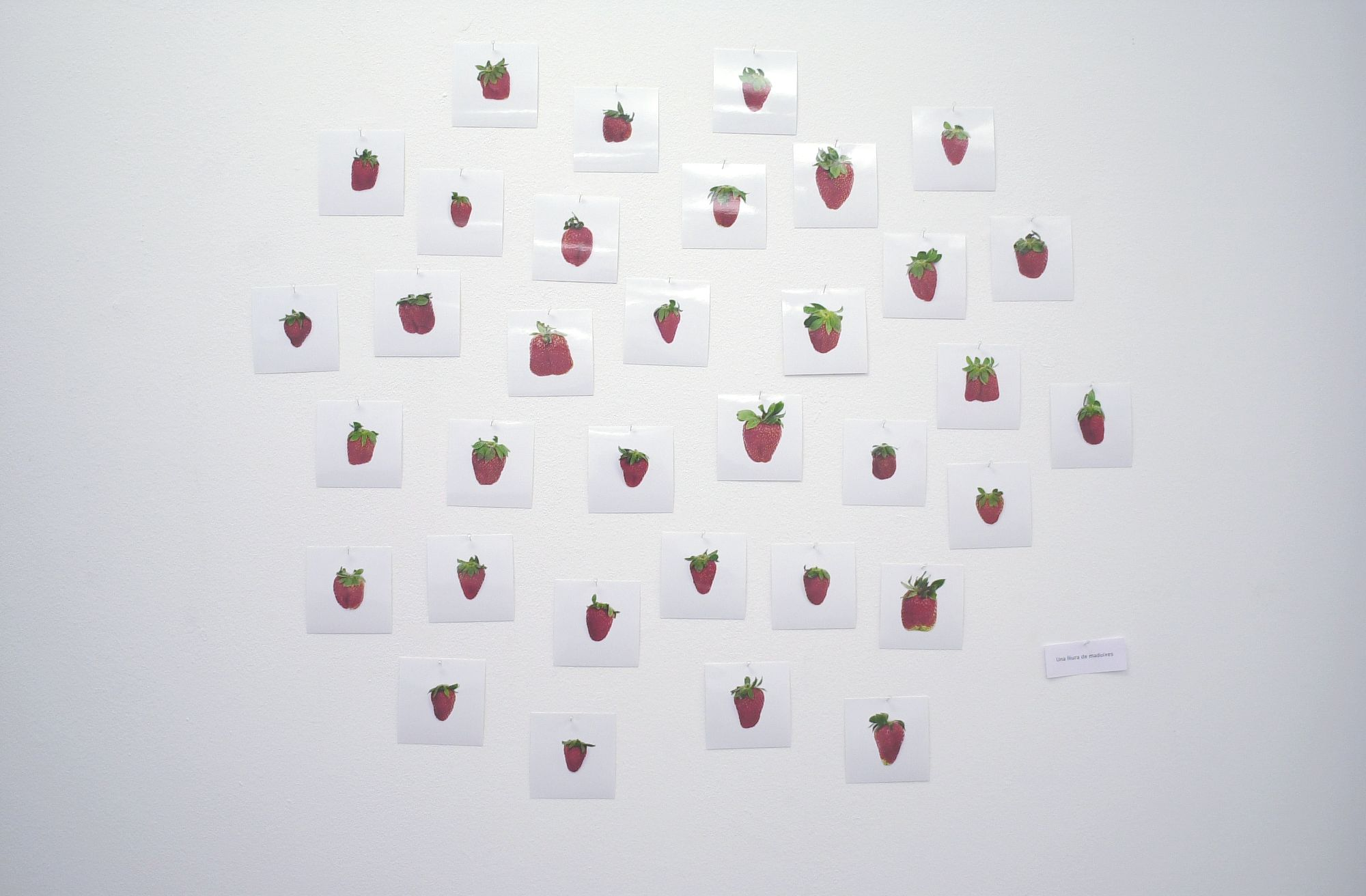 One Pound of Strawberries, 2004 |  | ProjecteSD