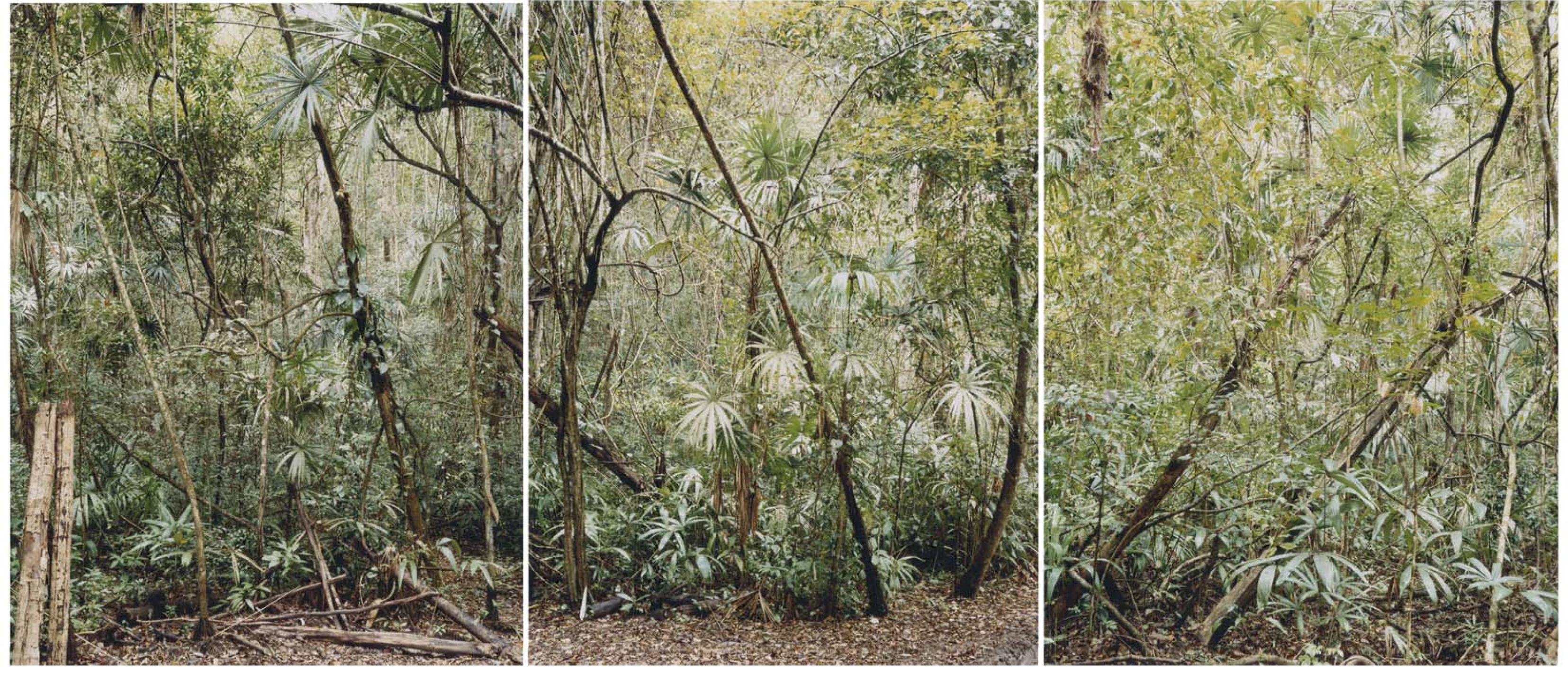 Sin Título (Estructuras invisibles # 6,7,8), 2006 |  | ProjecteSD