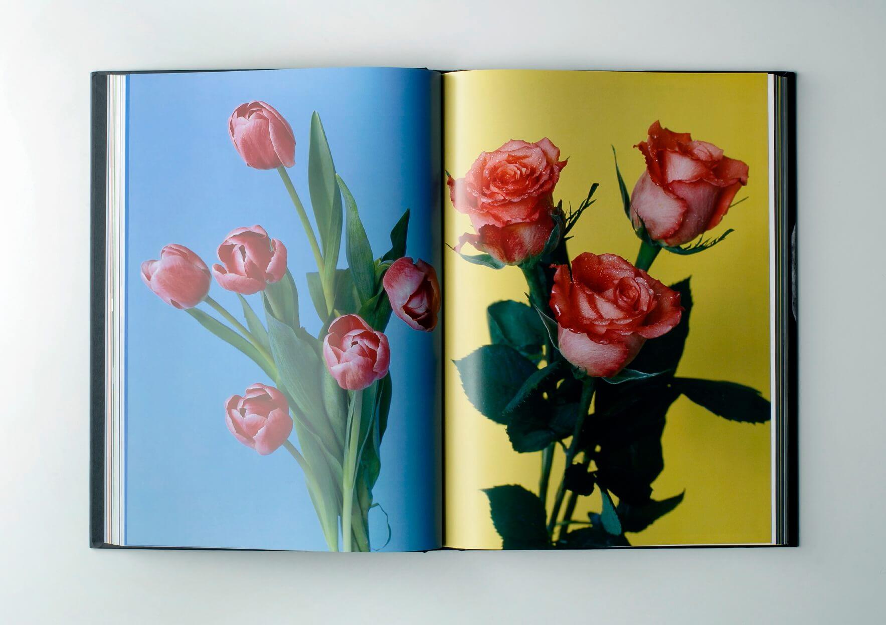 | Buch # 9 | ProjecteSD