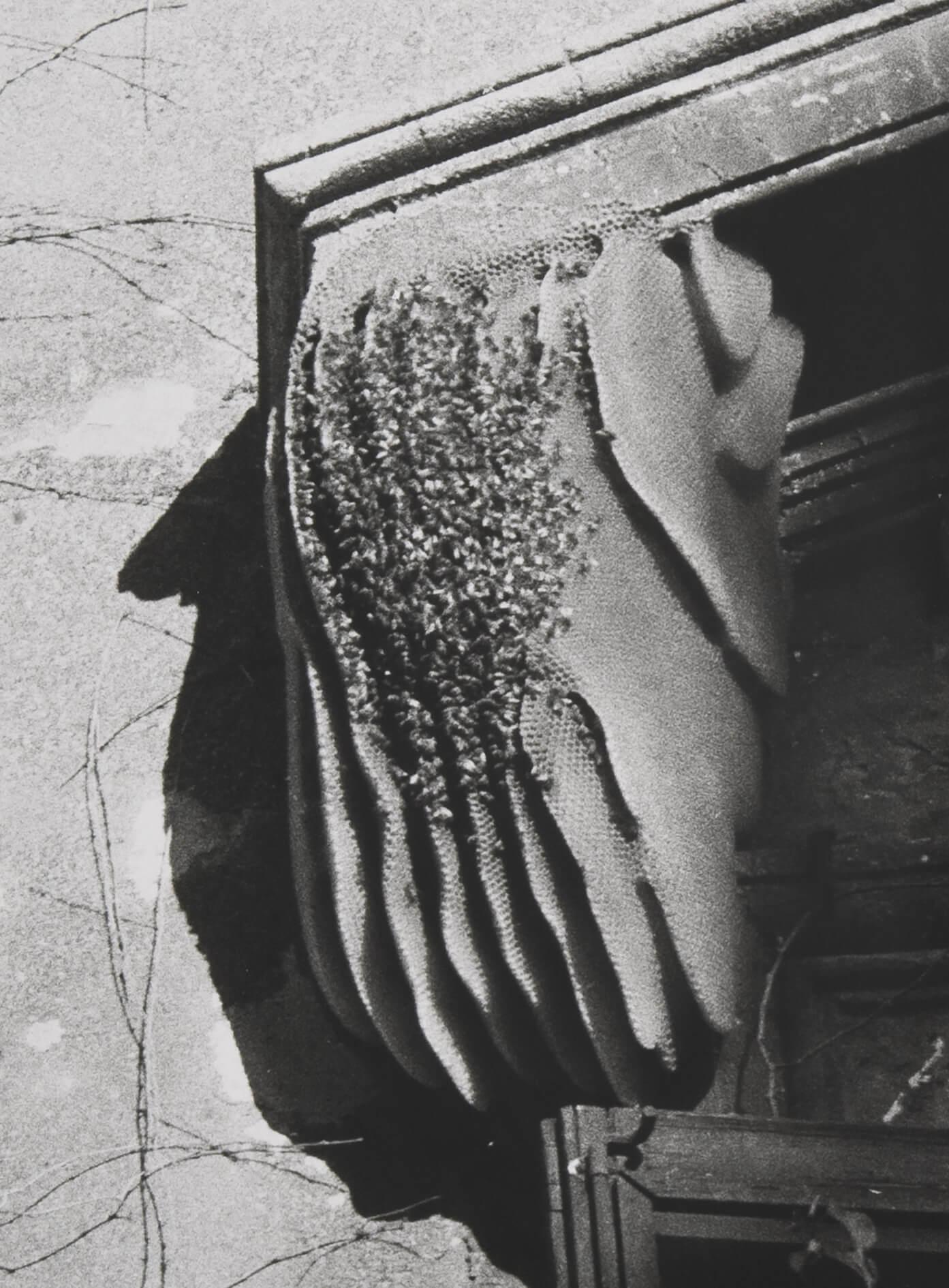 Bees (Rome), 2011 |  | ProjecteSD