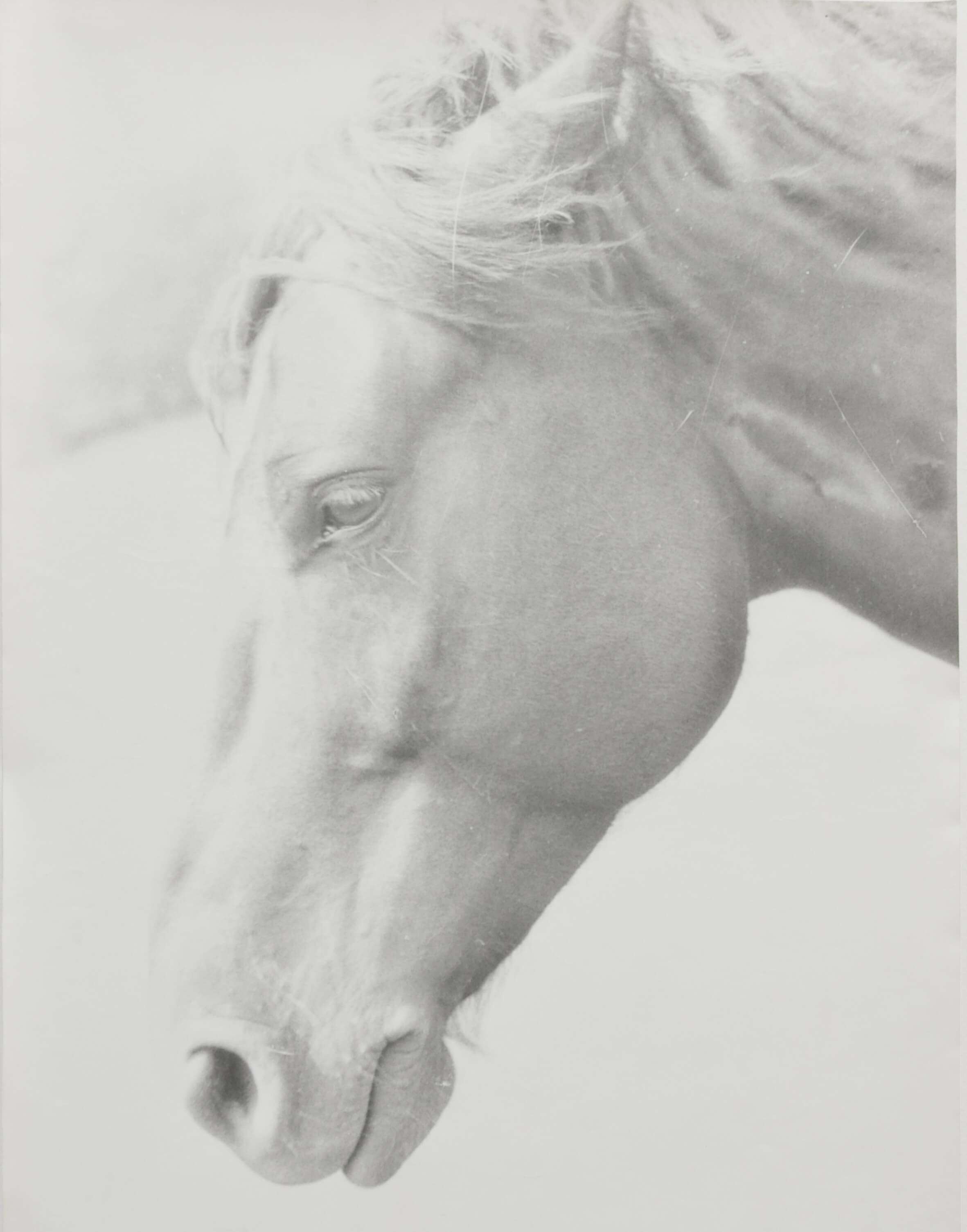 From Physiologus (Horse), 1999- 2017 |  | ProjecteSD