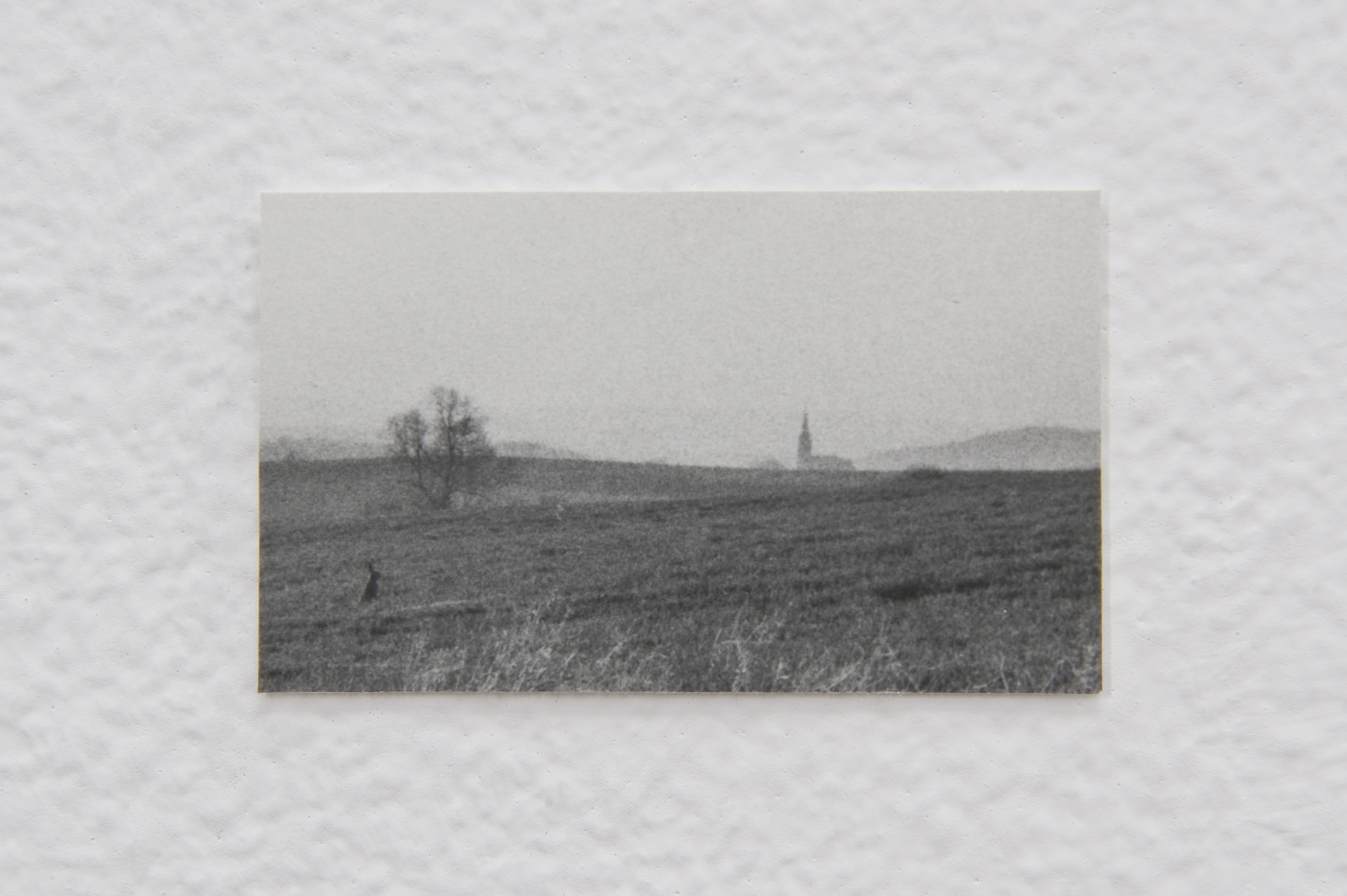 Untitled (Landscape), 2014 | Jochen Lempert | ProjecteSD