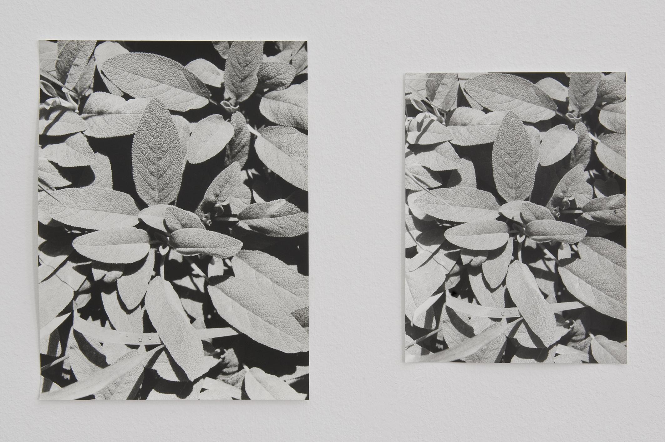 Salvia, 2013 – 2014 | Jochen Lempert | ProjecteSD