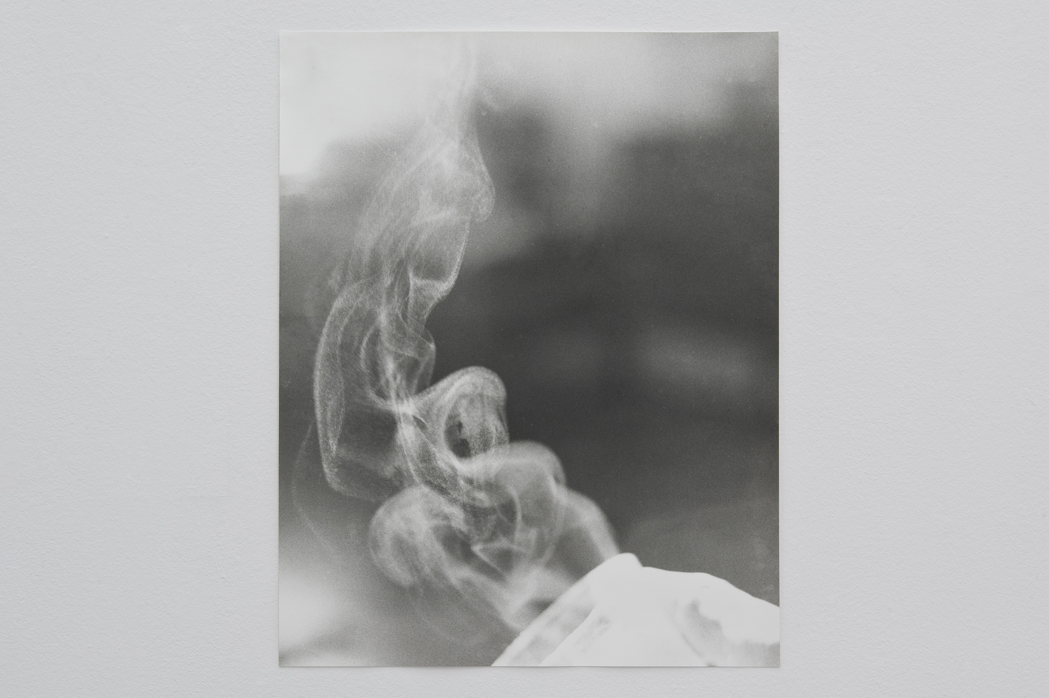Untitled (Green Tea), 2014 | Jochen Lempert | ProjecteSD