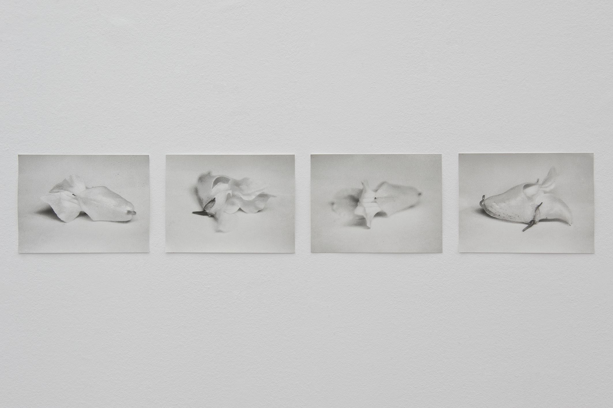 Untitled (Himalayan Balsam), 2014 | Jochen Lempert | ProjecteSD