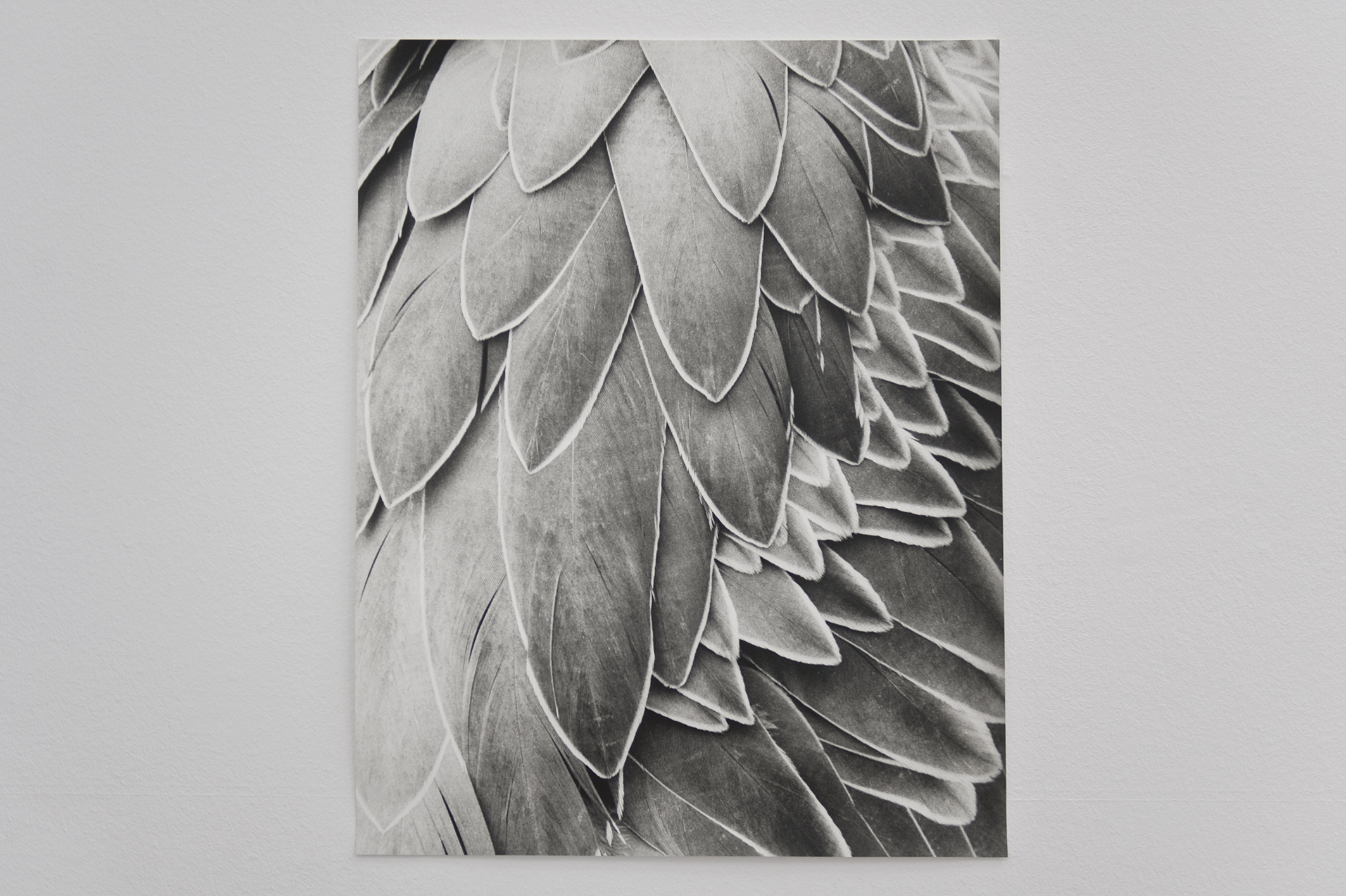 Untitled (Feathers), 2014 | Jochen Lempert | ProjecteSD