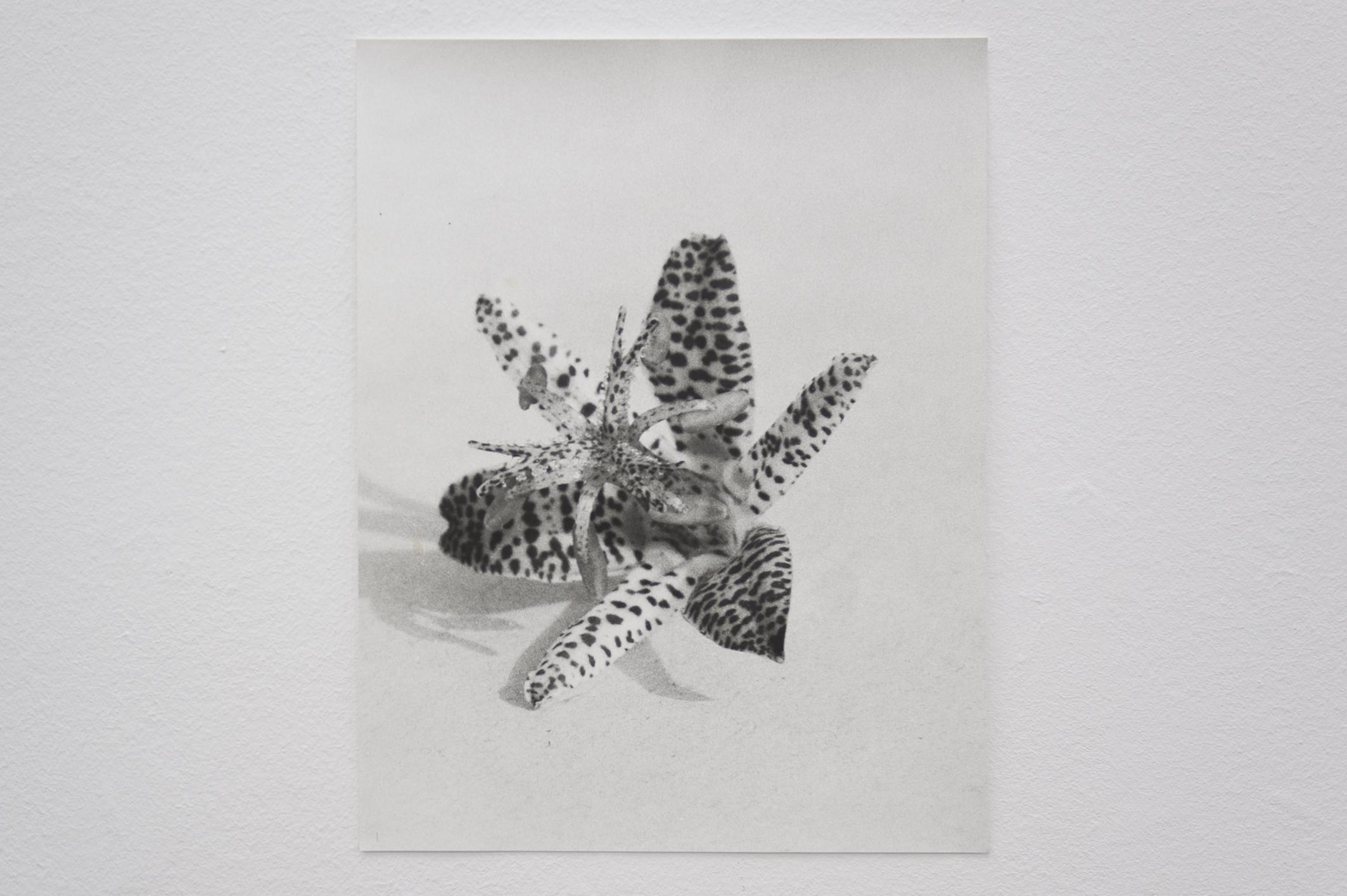 Flower (alert), 2014 | Jochen Lempert | ProjecteSD