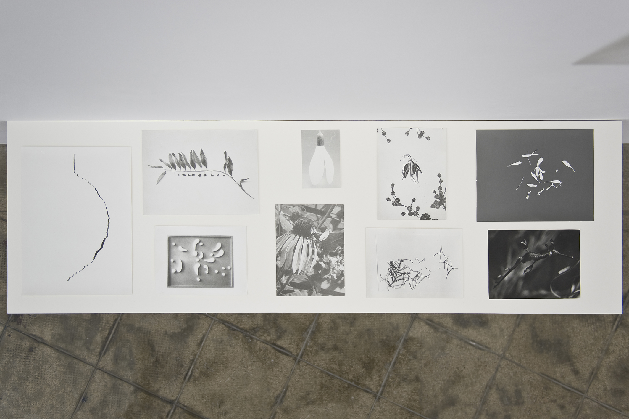Botanical Box, 2014 | Jochen Lempert | ProjecteSD
