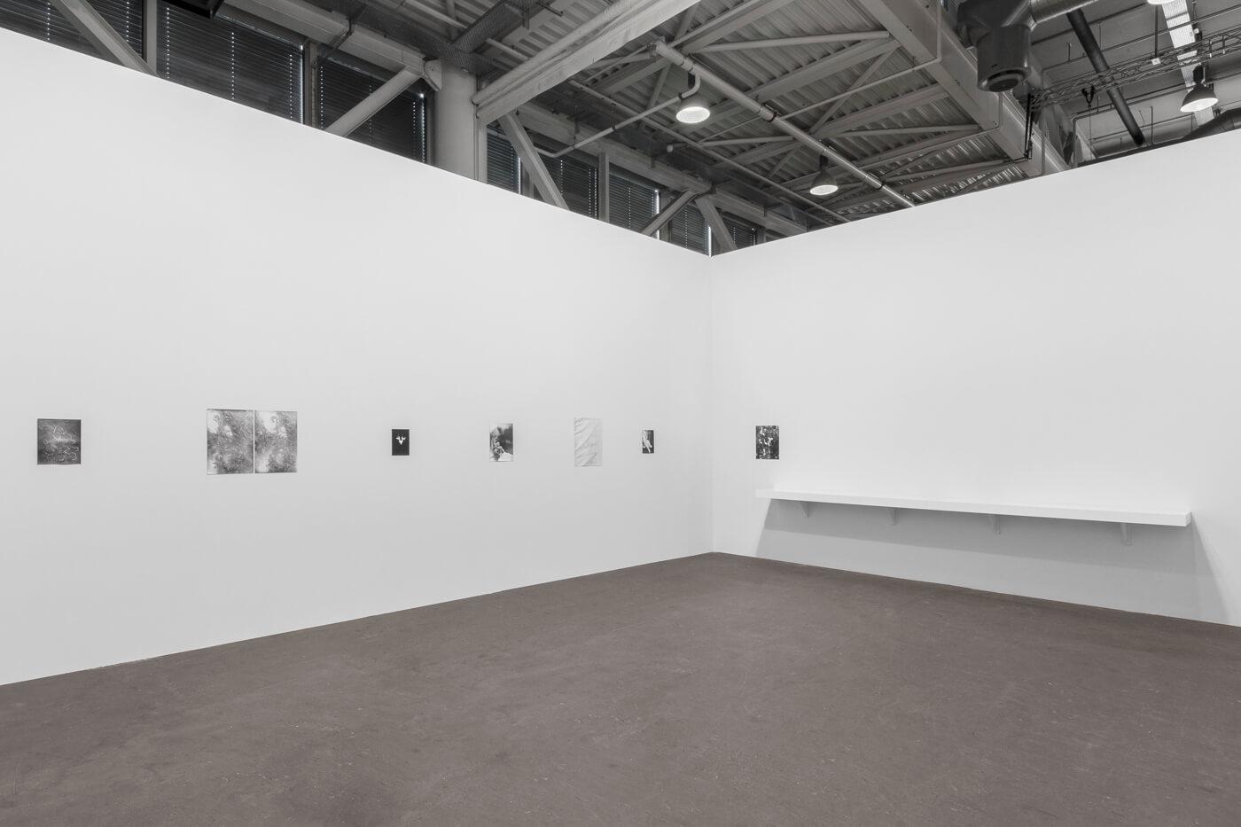 Installation view: Botanical Box, ProjecteSD, Art Unlimited   ART BASEL 2019   ProjecteSD