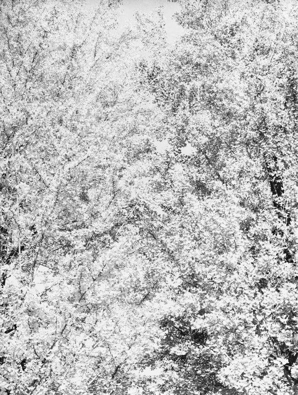 Untitled (Gingko, Japan), 2017 |  | ProjecteSD