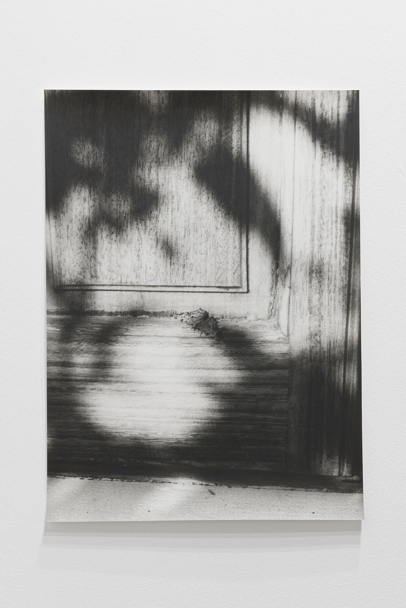 Untitled (Polygonia c-album), 2019 |  | ProjecteSD