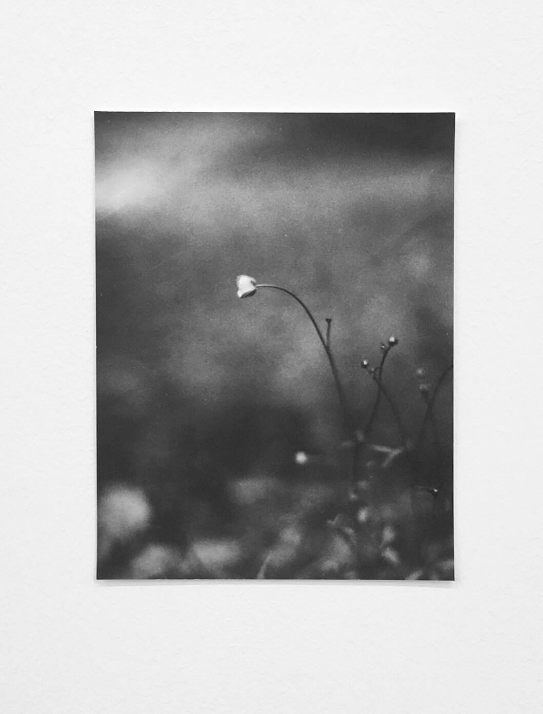 Untitled (Sleeping Flower), 2018 |  | ProjecteSD