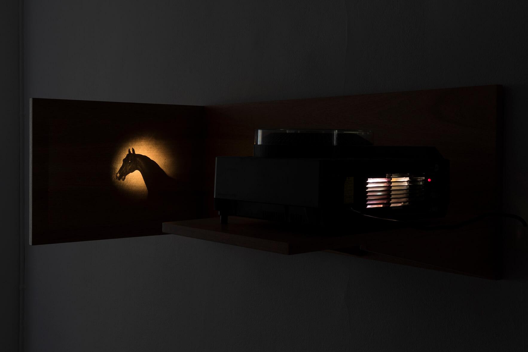 Secretos: linterna mágica (proyección), 2016 | El Triunfo de la Vida Solitaria | ProjecteSD