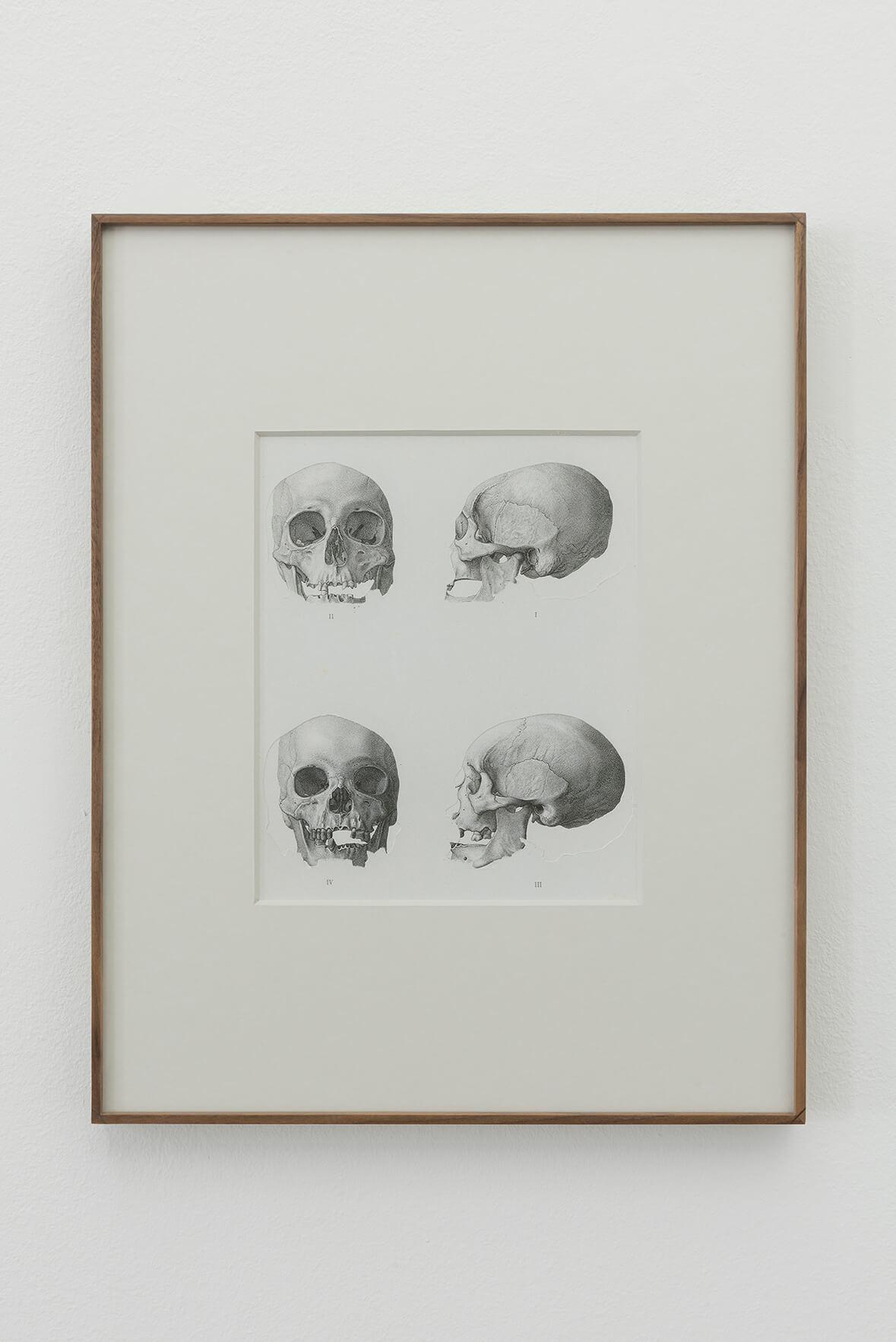 Geodesia y antropometría (crania ethnica), 2016 | Concavitat | ProjecteSD