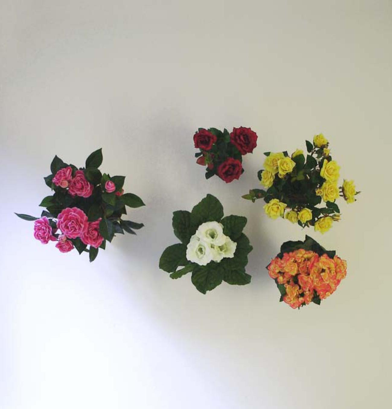 Five Flowerpots, 2008 |  | ProjecteSD