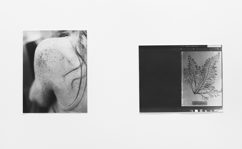 Anna atkins, 2011 |  | ProjecteSD