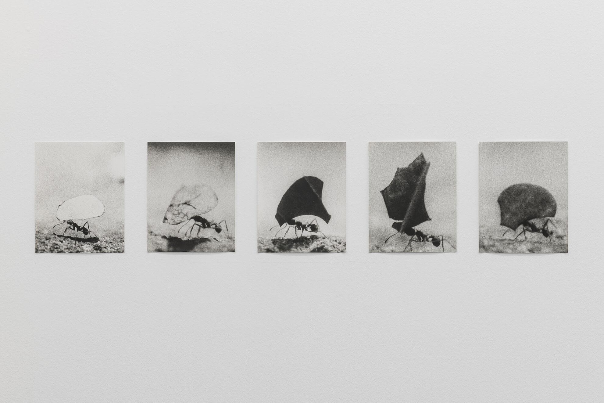 Untitled (Blattschneiderameisen), 2016 |  | ProjecteSD