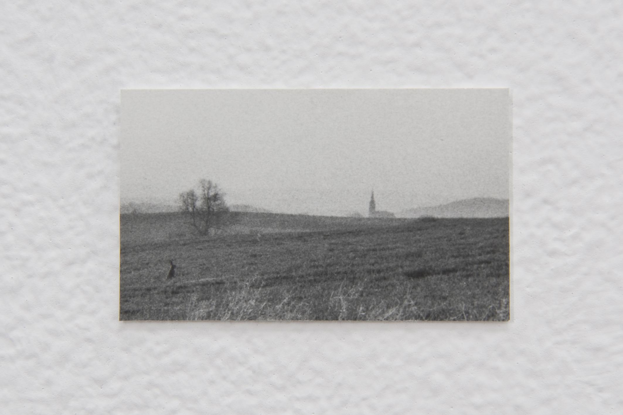 Untitled (Landscape), 2014 | Jochen Lempert | ProjecteSD