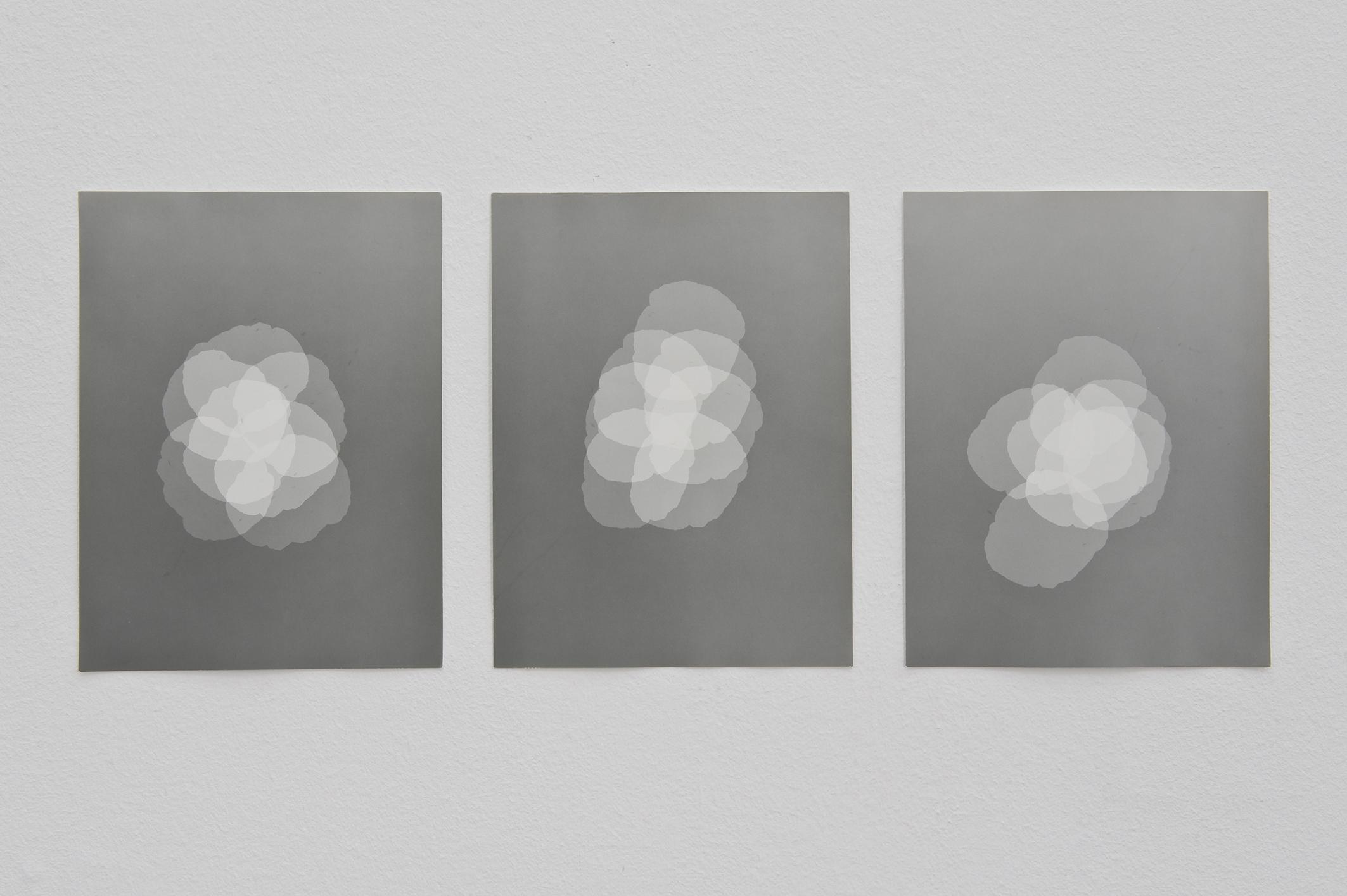 Poppy Flowers, 2012 | Jochen Lempert | ProjecteSD