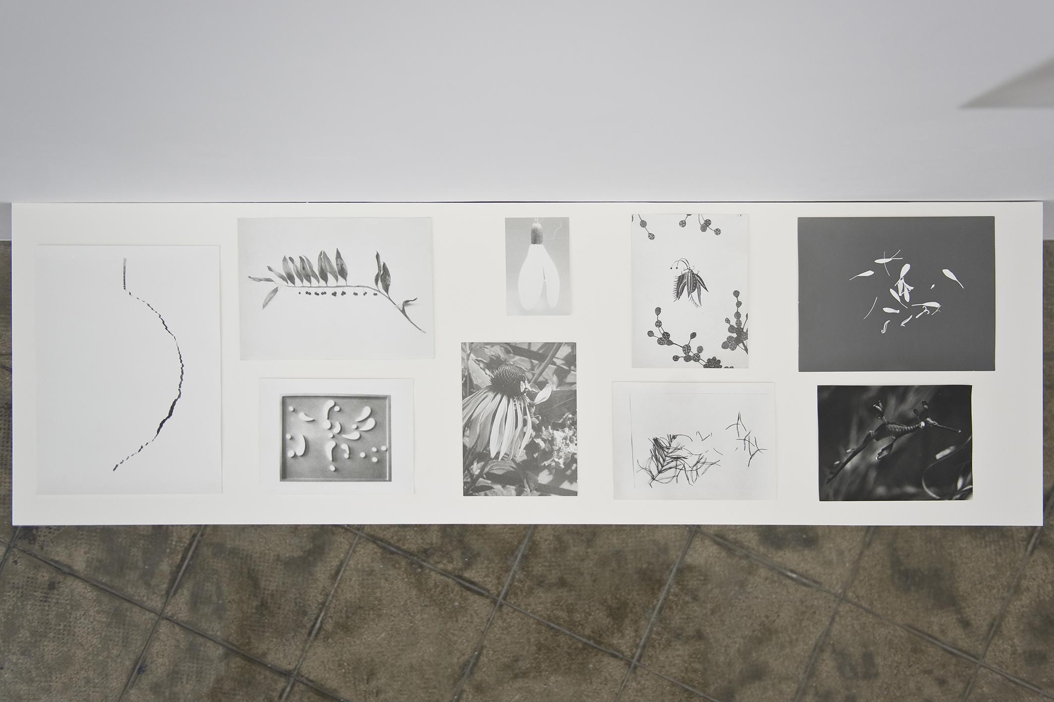 Botanical Box, 2014 | Jochen Lempert | ProjecteSD