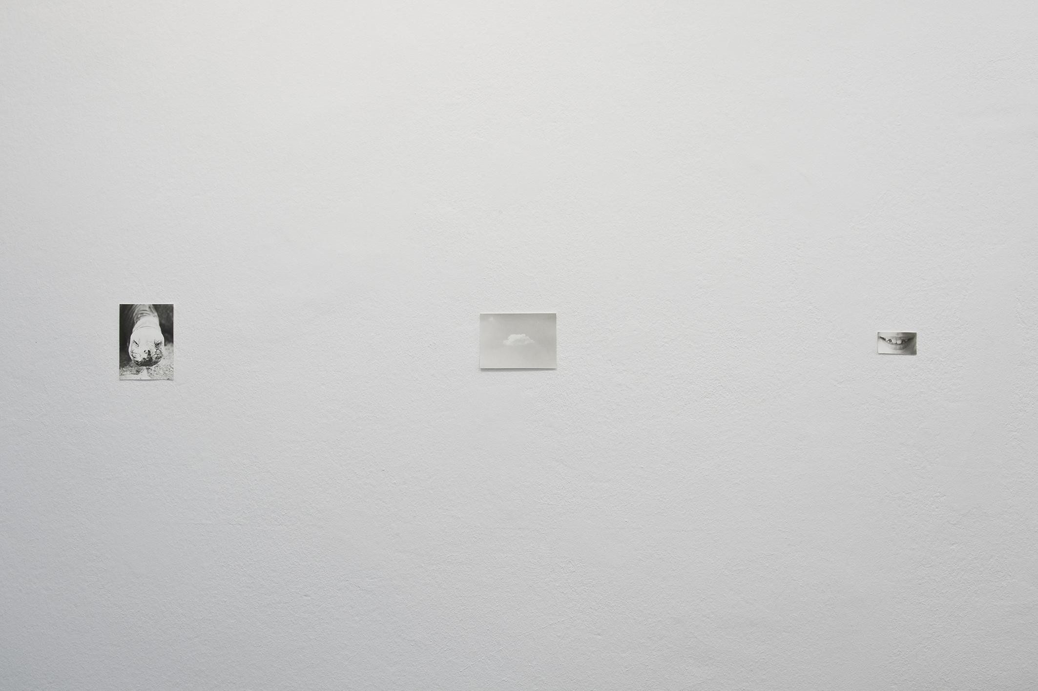 Lyren, 2013 (Detail) | Jochen Lempert | ProjecteSD