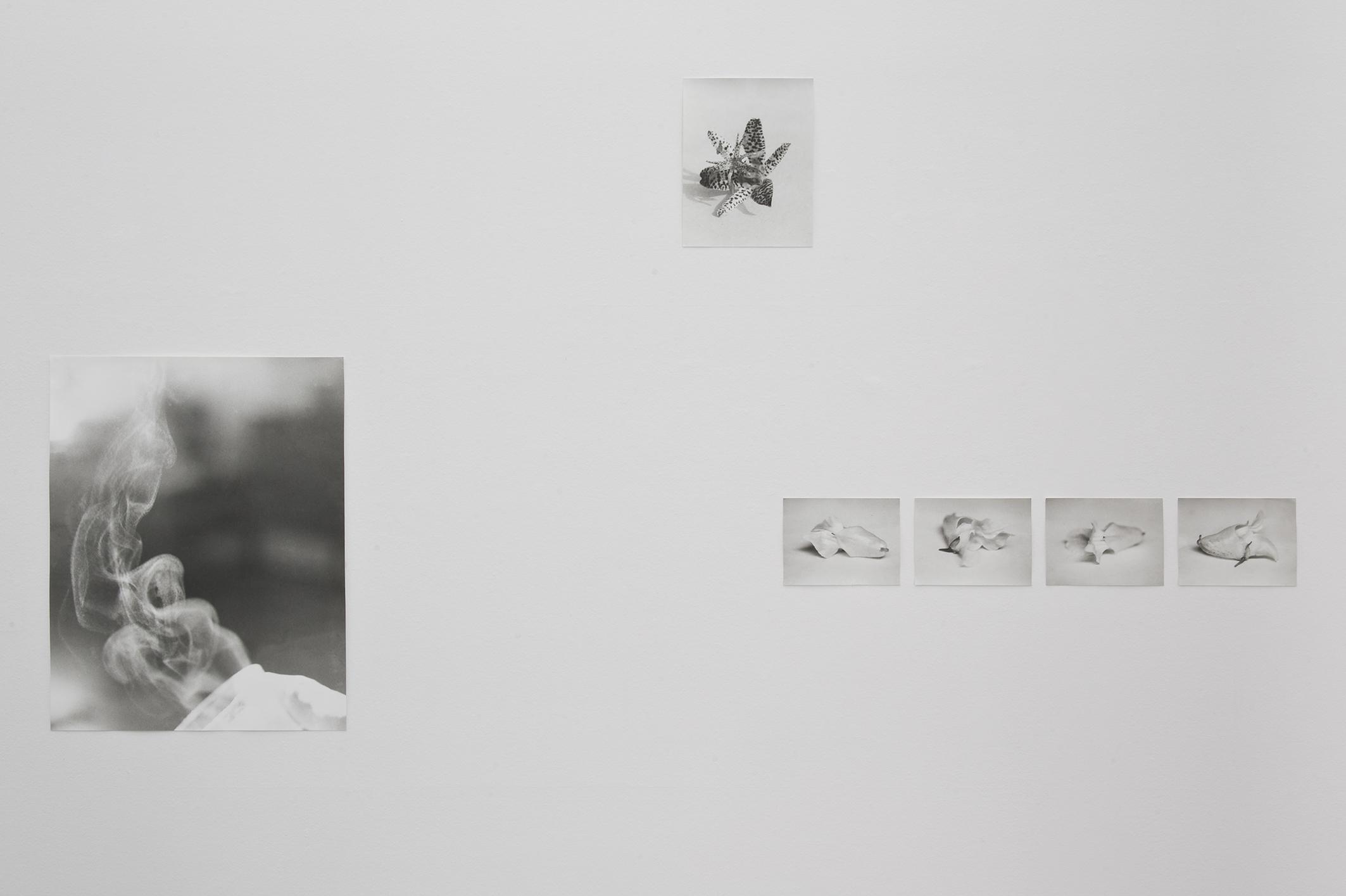 Installation view: Jochen Lempert, Projecte SD, Barcelona, 2014 | Jochen Lempert | ProjecteSD