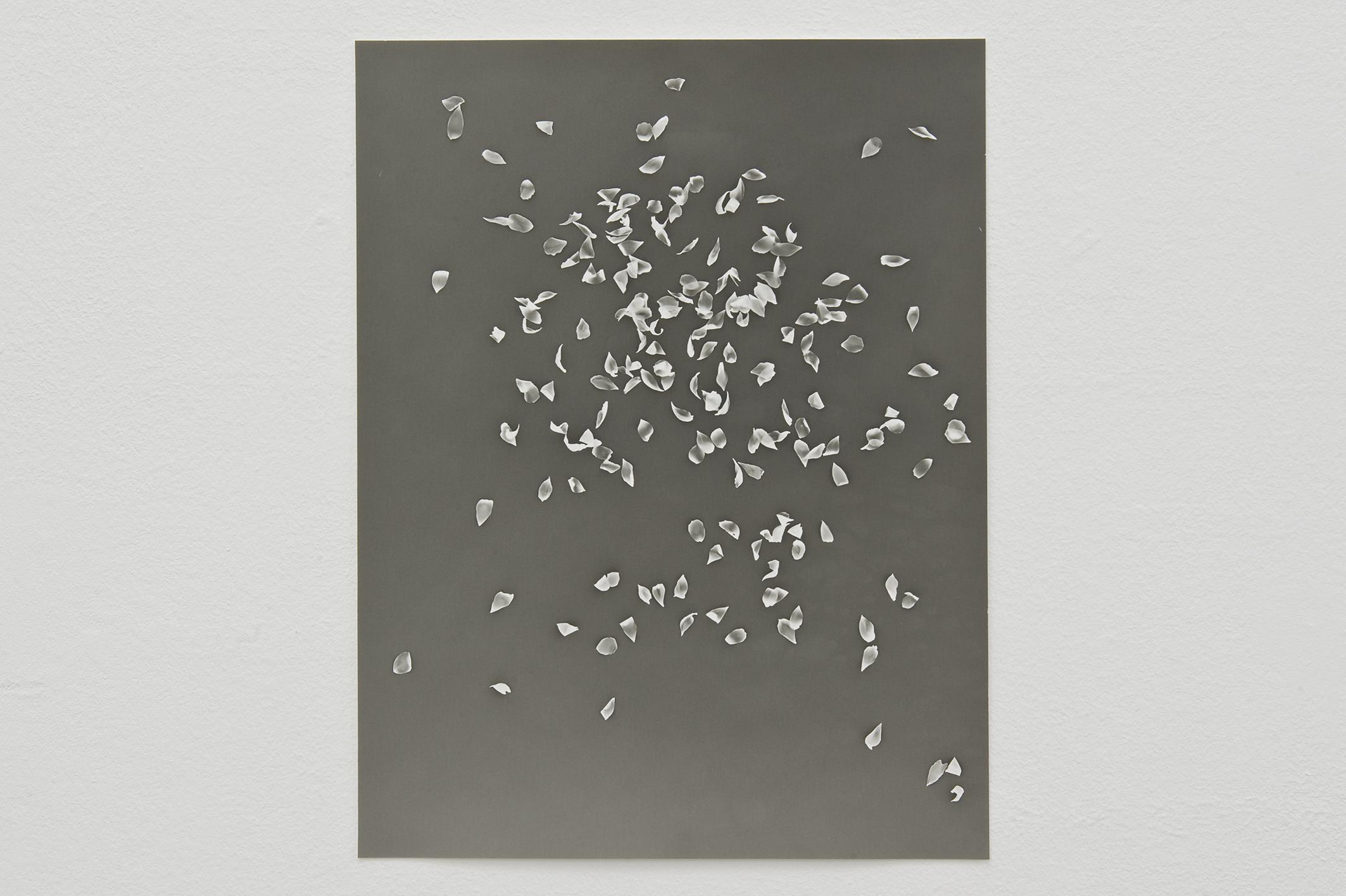 Cherry Blossoms II, 2014 | Jochen Lempert | ProjecteSD