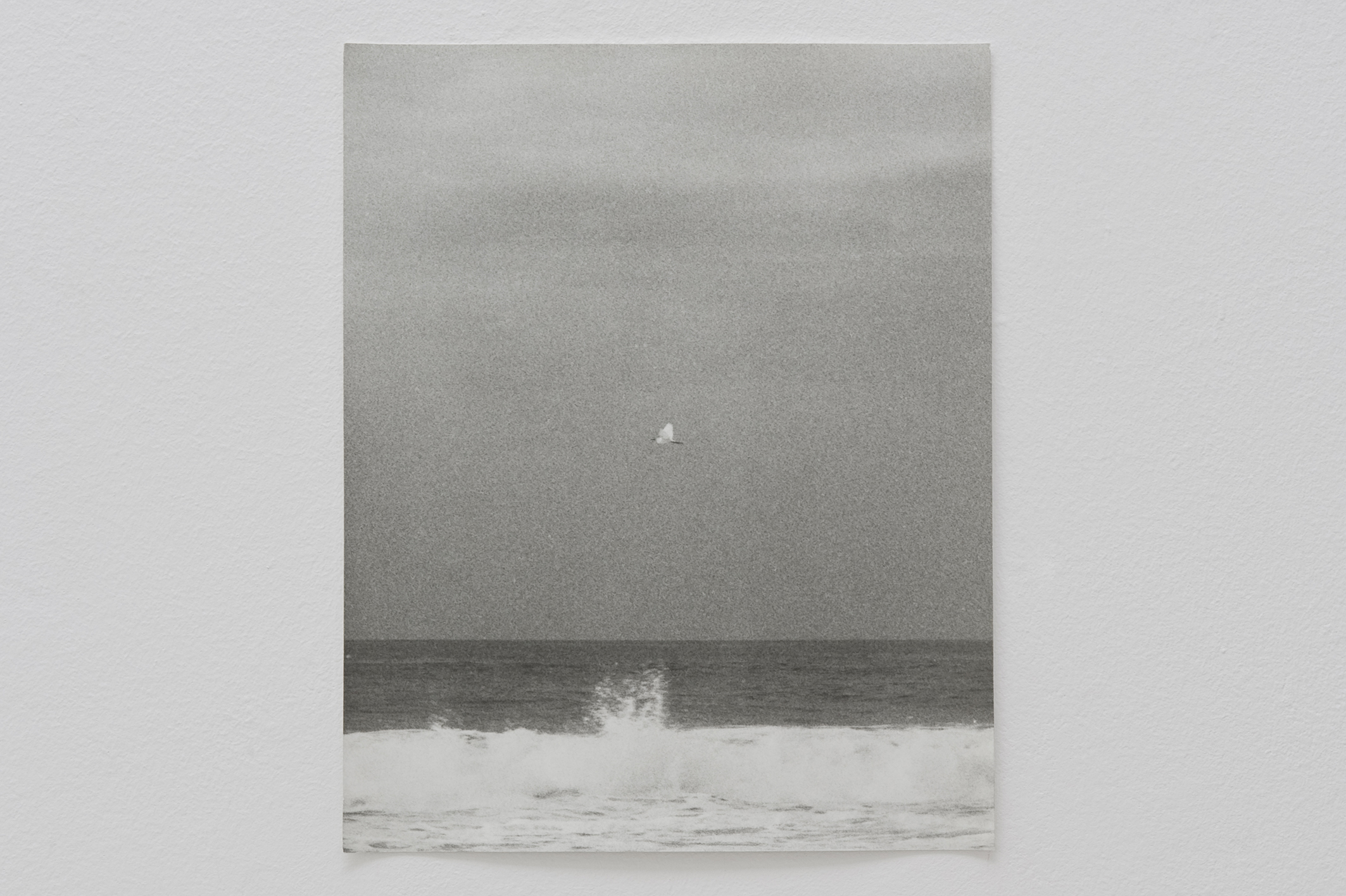 Untitled (Egretta), 2014 | Jochen Lempert | ProjecteSD
