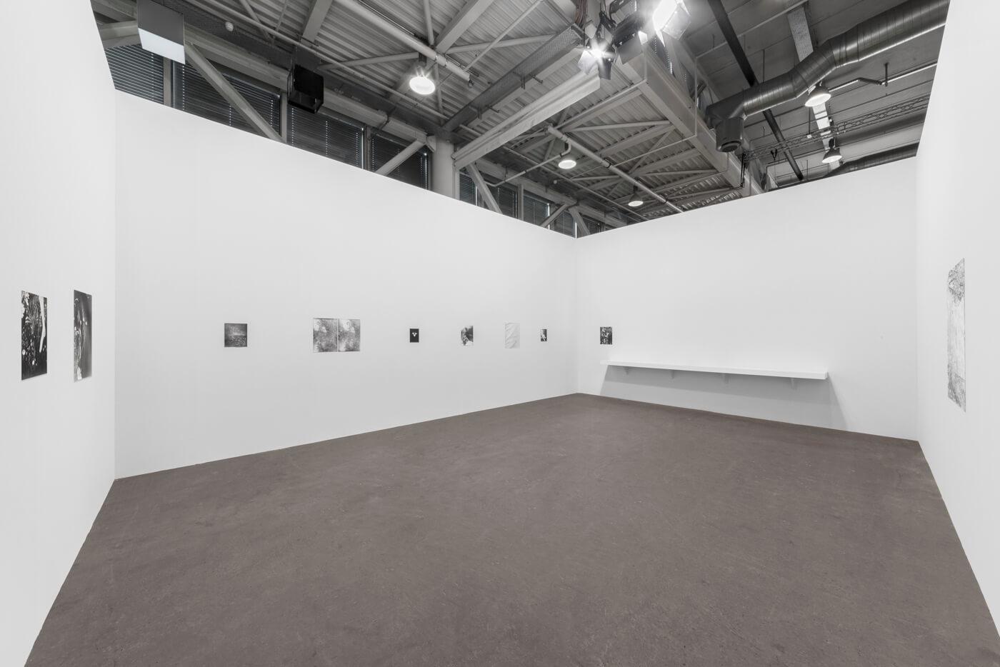 Installation view: Botanical Box, ProjecteSD, Art Unlimited | ART BASEL 2019 | ProjecteSD