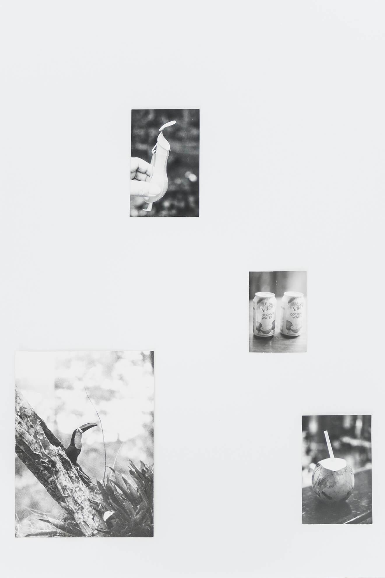 JOCHEN LEMPERT.Hercules Florence, Ordre Brésilien ou Palmien, 2017 – 2018. (Detail) | Lara Fluxà: Delu / Accrochage #5: Set Petites Històries | ProjecteSD