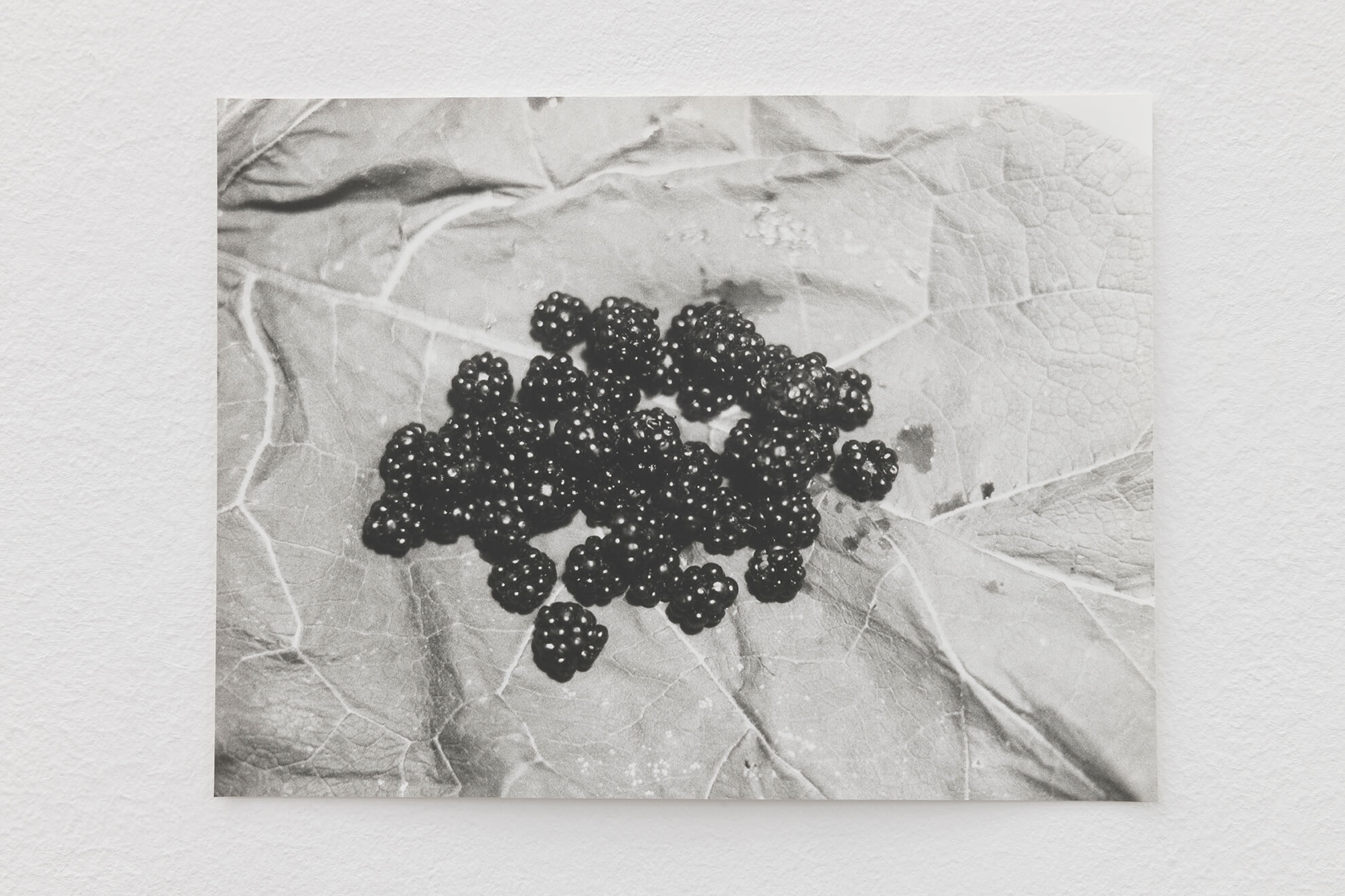 Blackberries, 2021 | JOCHEN LEMPERT: VISIBLE LIGHT | ProjecteSD