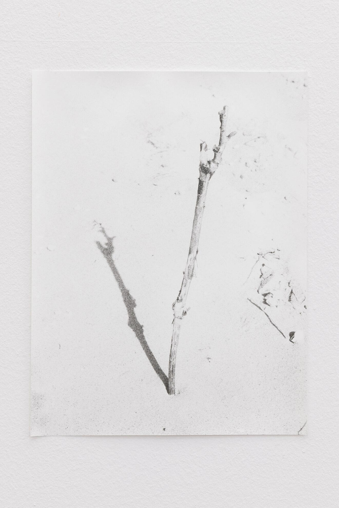 Grafted Vine, 2021 | JOCHEN LEMPERT: VISIBLE LIGHT | ProjecteSD