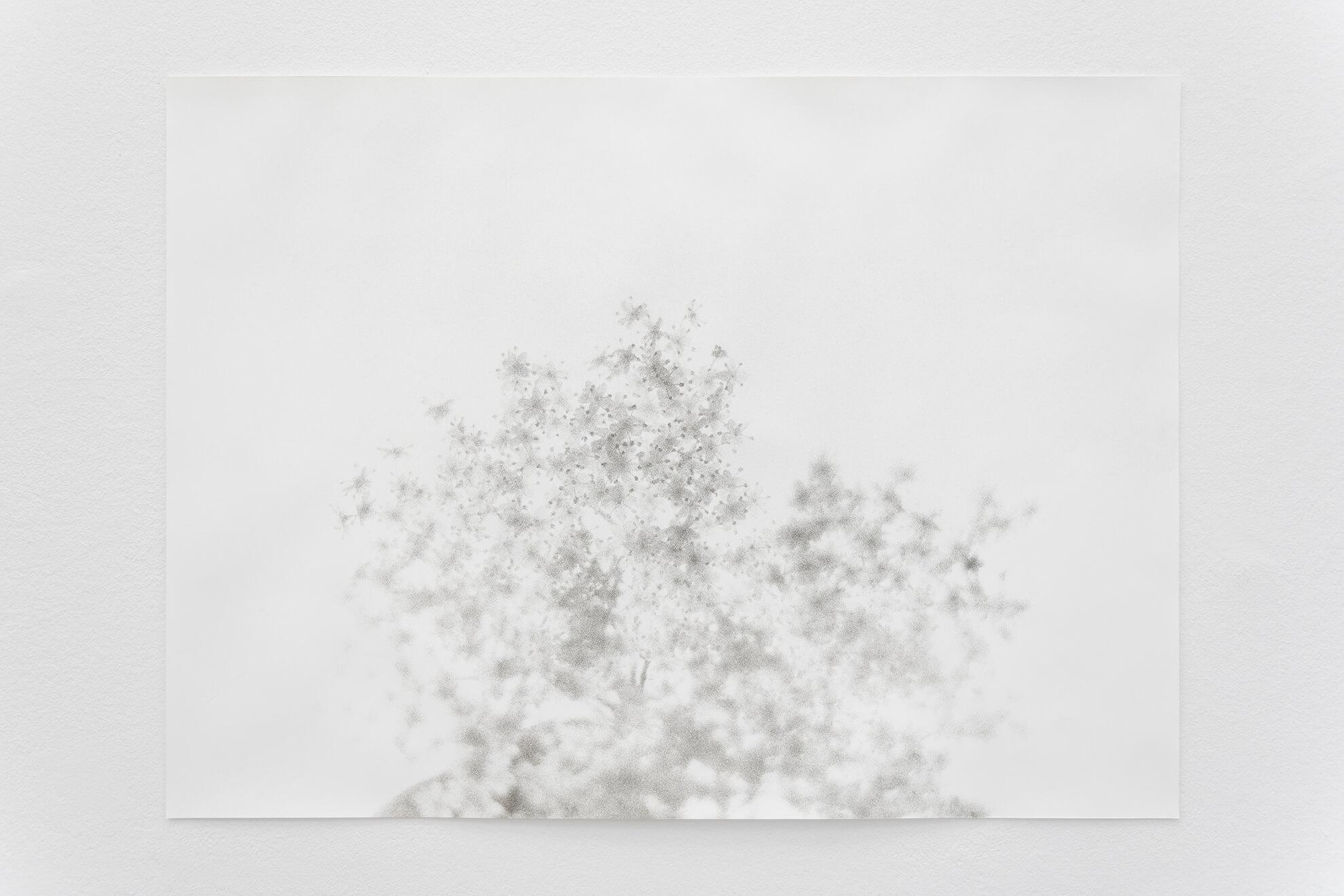 Holunderblüte, 2021 | JOCHEN LEMPERT: VISIBLE LIGHT | ProjecteSD