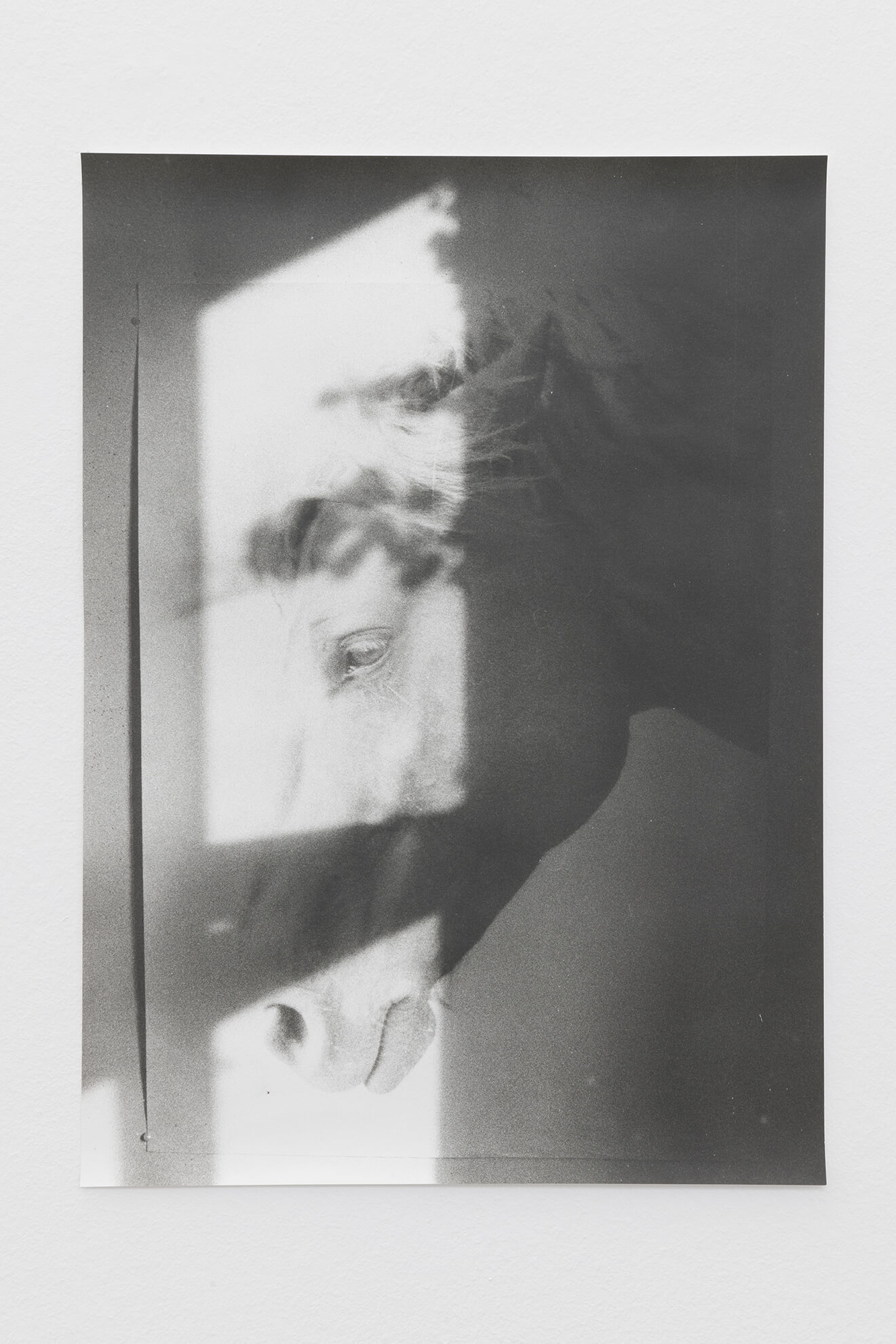 Ivy shadow and horse, 2021 | JOCHEN LEMPERT: VISIBLE LIGHT | ProjecteSD
