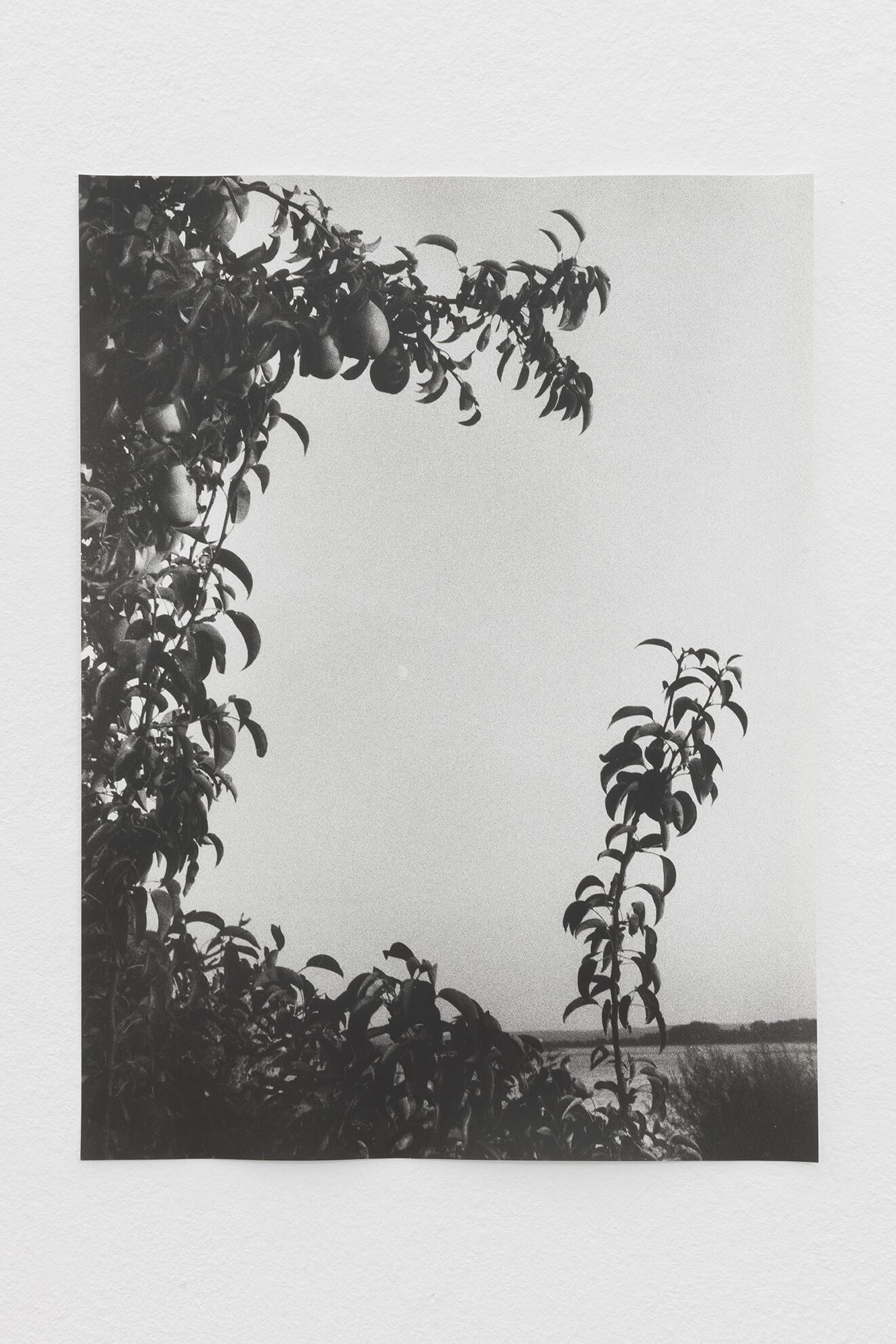 Moon / Pears, 2021 | JOCHEN LEMPERT: VISIBLE LIGHT | ProjecteSD