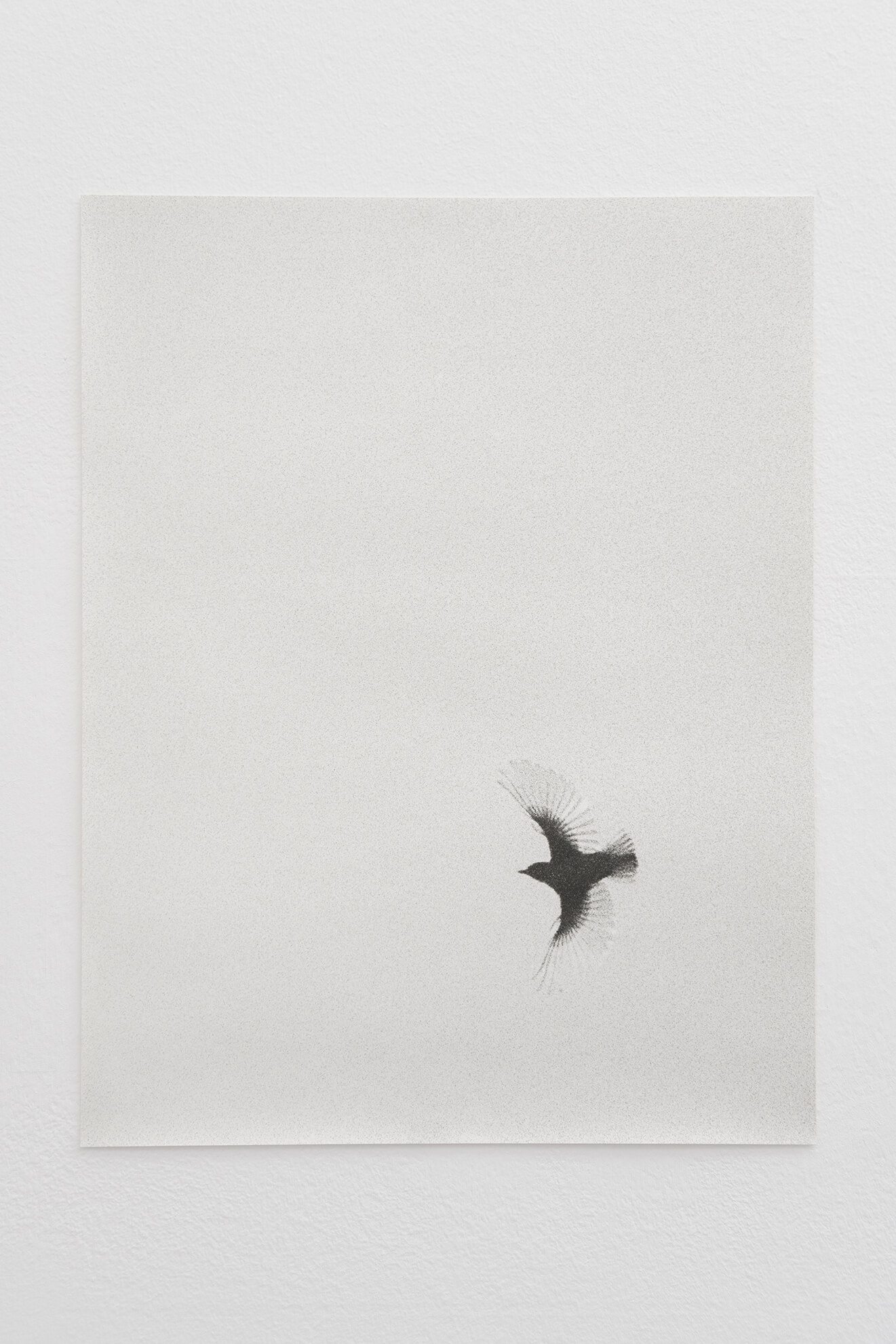 Musciaga I, 2019-2021 | JOCHEN LEMPERT: VISIBLE LIGHT | ProjecteSD