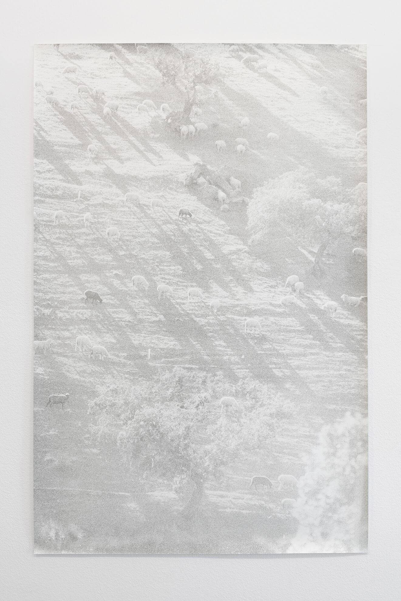 Untitled (Sheeps), 2021 | JOCHEN LEMPERT: VISIBLE LIGHT | ProjecteSD